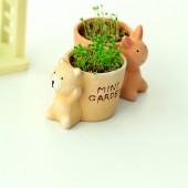 正品 創意辦公室花園綠色植物 寶貝迷你綠色栽培